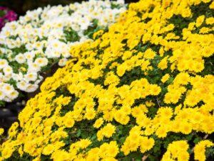 広島で家族葬を行いました