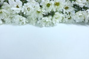 広島市内で一日葬